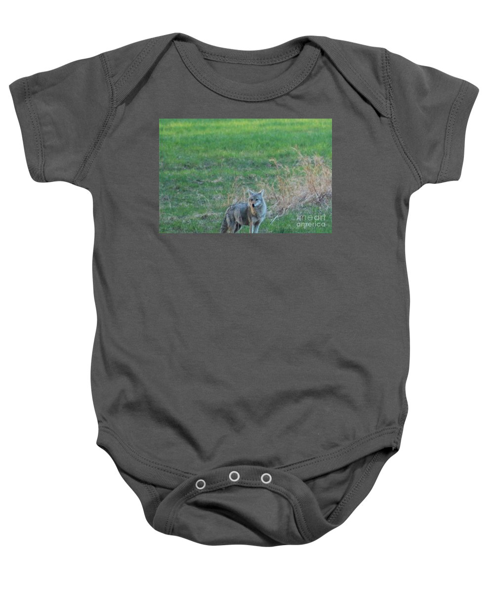 Coyote Baby Onesie featuring the photograph Eastern Coyote In Grass by Neal Eslinger