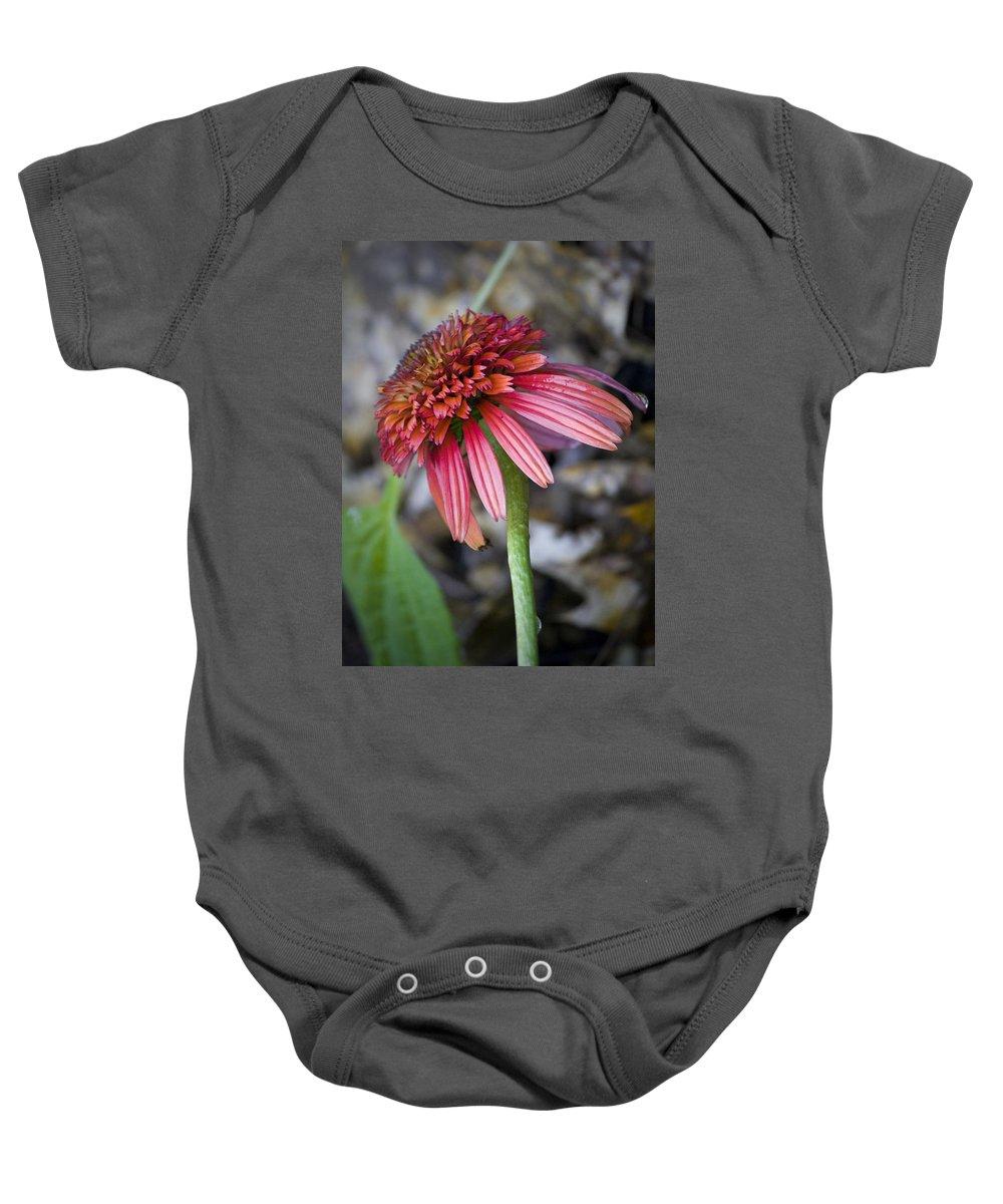 Coneflower Baby Onesie featuring the photograph Echinacea Hot Papaya by Teresa Mucha