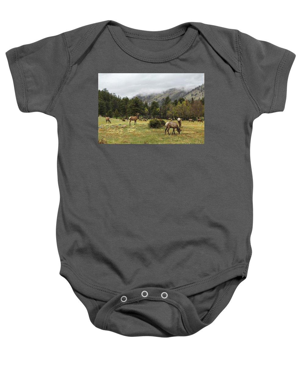 Elk Baby Onesie featuring the photograph Elk Herd by Lorraine Baum