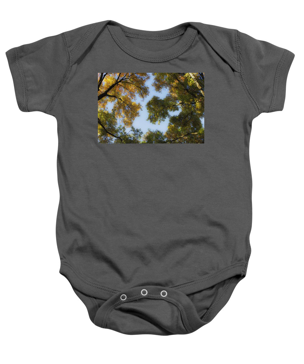 Fall Baby Onesie featuring the photograph Fall Canopy In Virginia by Teresa Mucha