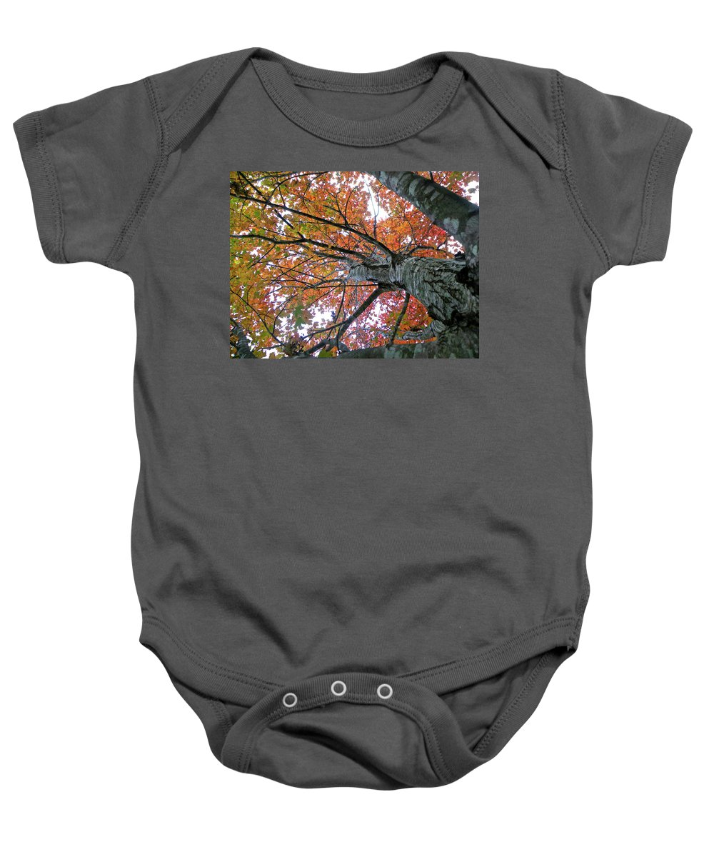 Tree Baby Onesie featuring the photograph Fall by Shannon Turek