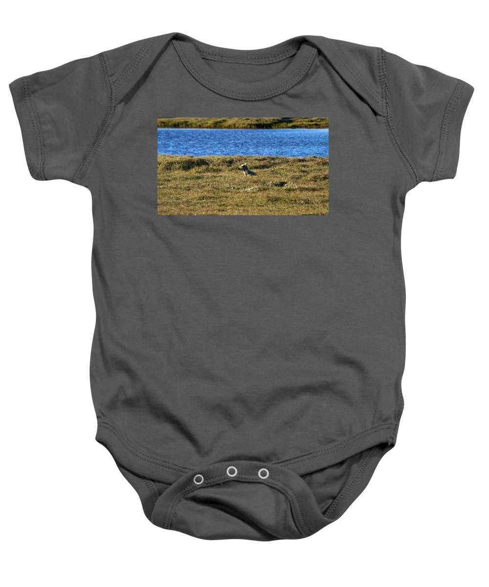 Caribou Baby Onesie featuring the photograph Fawn Caribou by Anthony Jones