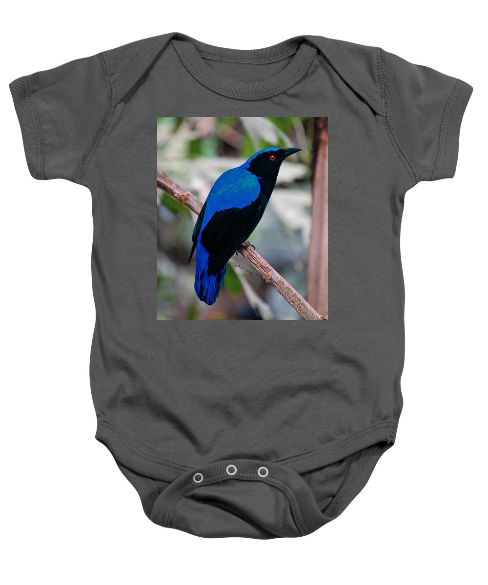 Fairy Bluebird Baby Onesie featuring the photograph Feathered Fairy by DigiArt Diaries by Vicky B Fuller