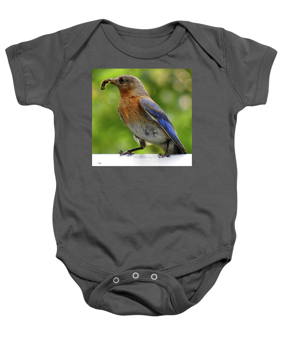 Bluebird Baby Onesie featuring the photograph Female Bluebird Feeding Her Brood by Sandi OReilly