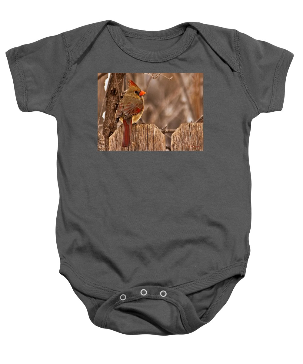 Northern Cardinal Baby Onesie featuring the photograph Female Cardinal On The Fence by Edward Peterson