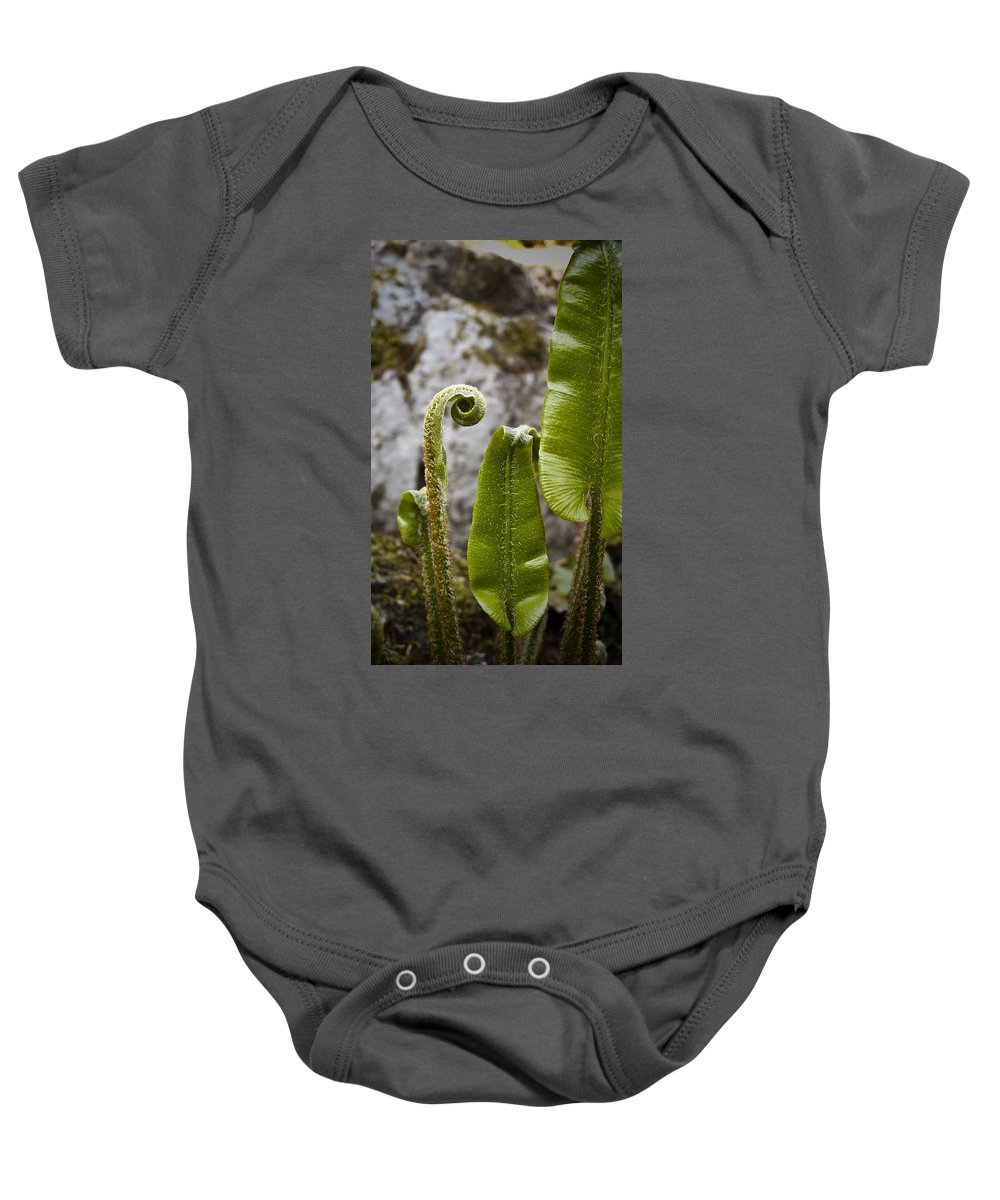 Irish Baby Onesie featuring the photograph Fern Study At Blarney Castle Ireland by Teresa Mucha