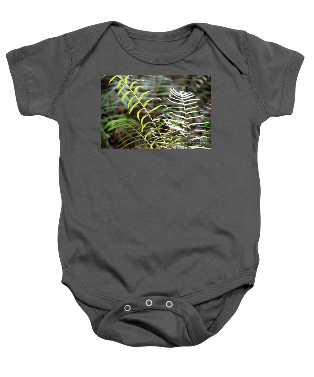 Ferns Baby Onesie featuring the photograph Ferns In Natural Light by Carol Groenen