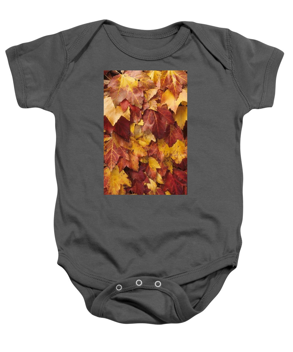Fall Baby Onesie featuring the photograph Final Fall In File by Laurie Paci