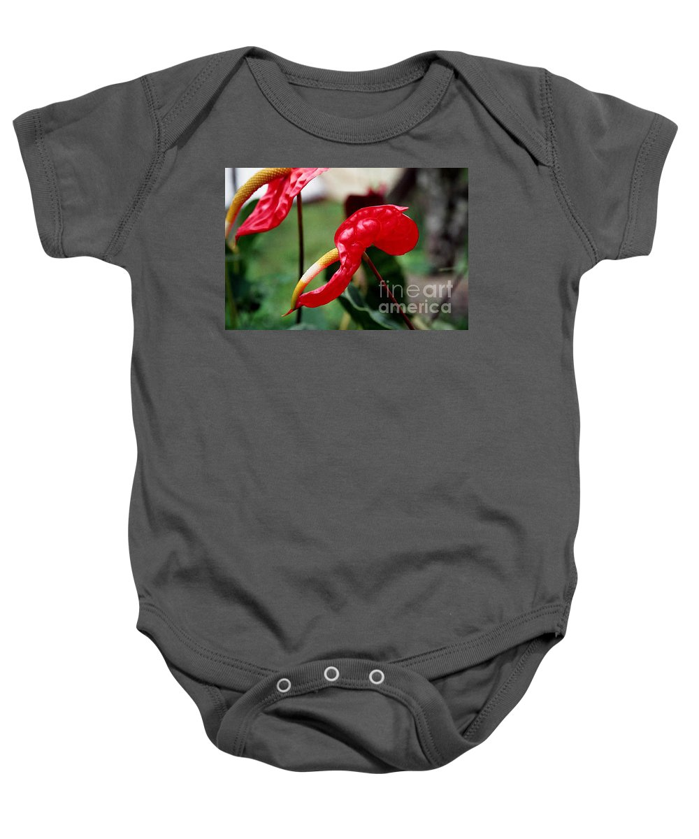 Exotic Flowers Baby Onesie featuring the photograph Flamingo Flower by Kathy McClure