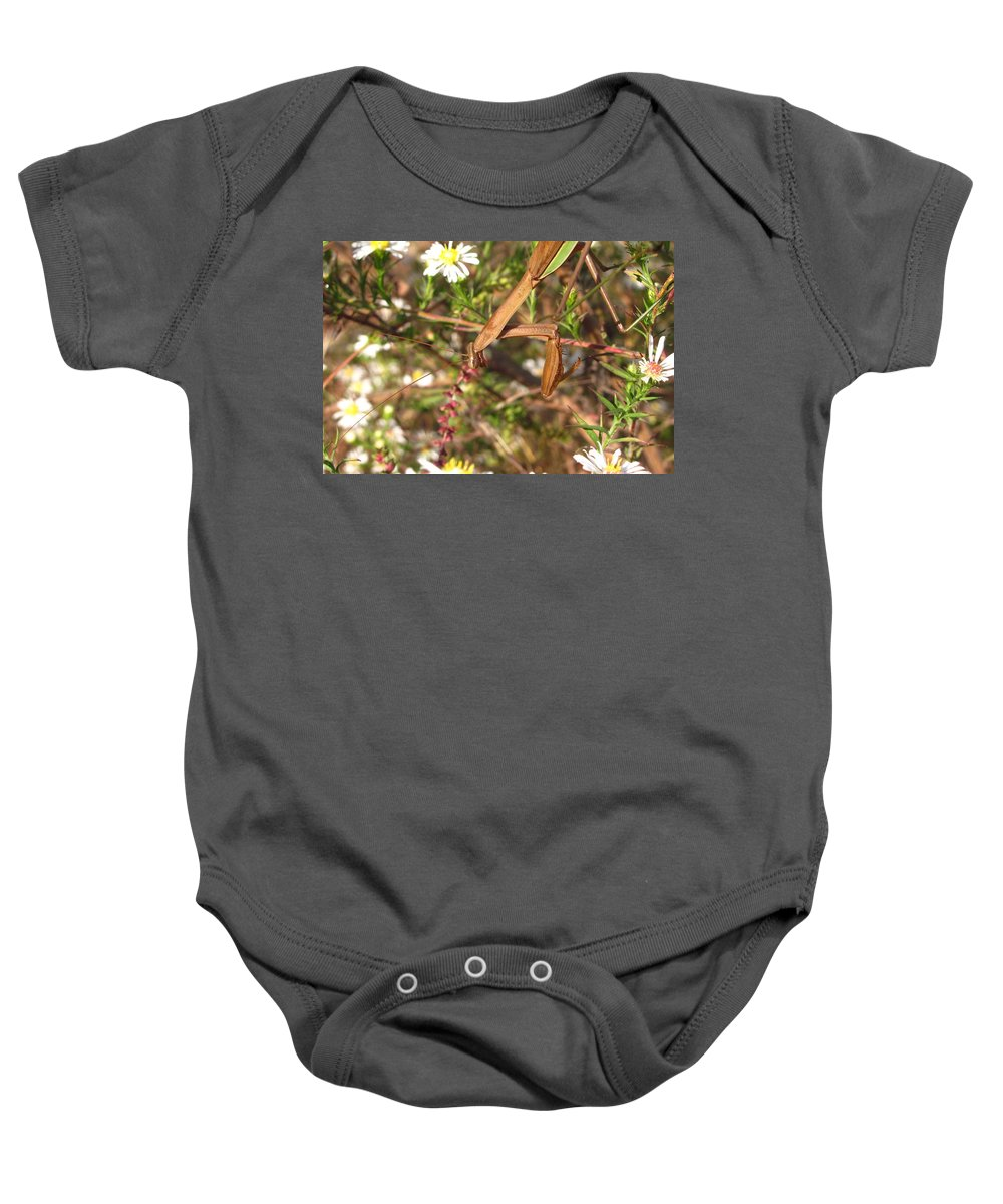 Praying Mantis Images Wild Flower Prints Entomology Savage Garden Biodiversity Preservation Meadow Ecosystem Natural Ecology Predatory Insects Maryland Mantis Brown Mantis Floral Mantis Baby Onesie featuring the photograph Floral Mantis by Joshua Bales