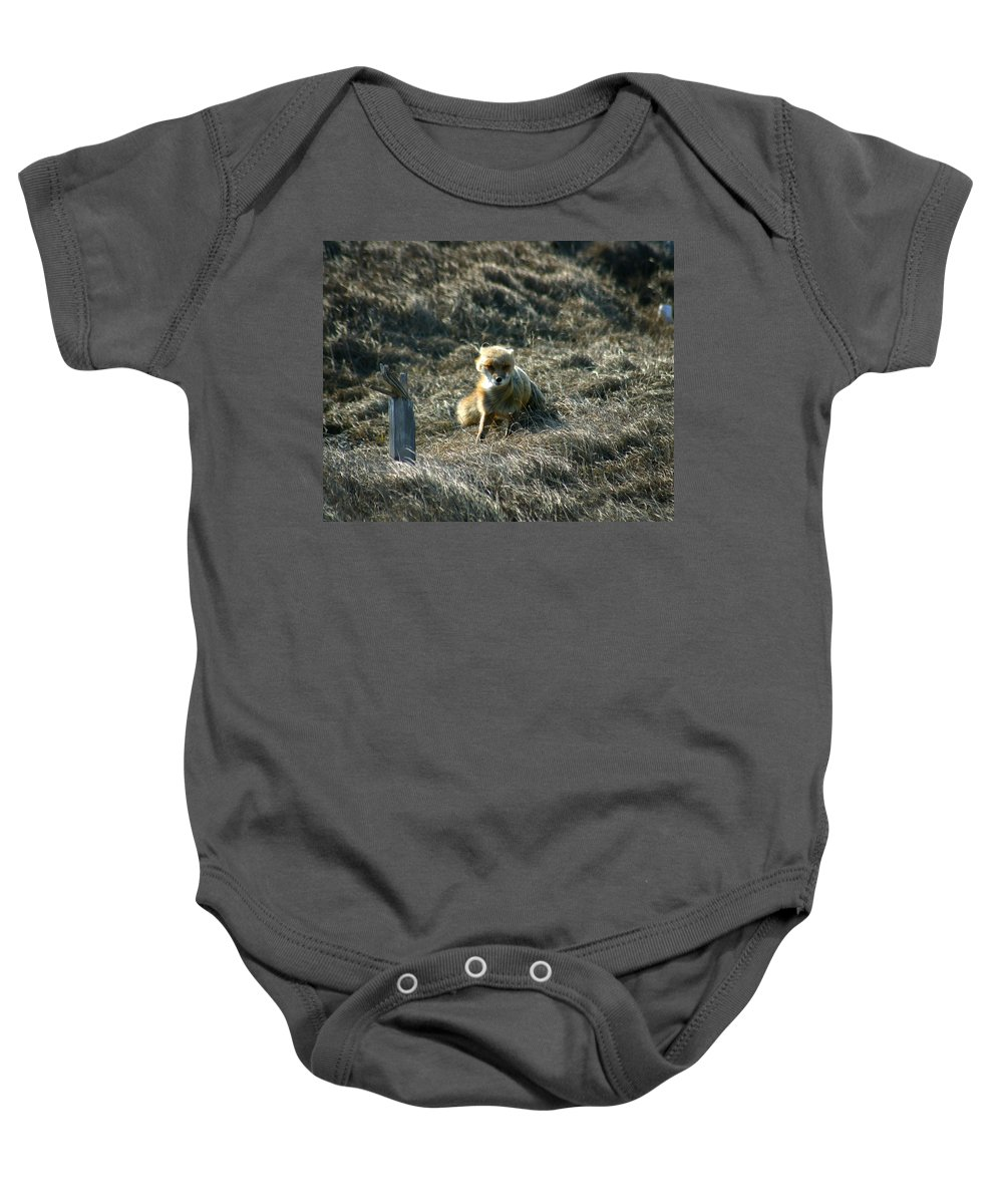 Red Fox Baby Onesie featuring the photograph Fox In The Wind by Anthony Jones