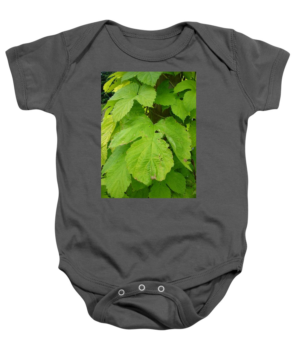 Hop Baby Onesie featuring the photograph Fresh English Golden Hop by Susan Baker