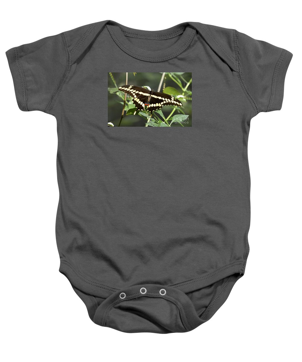 Greeting Baby Onesie featuring the photograph Giant Swallowtail Butterfly by Lisa Kilby