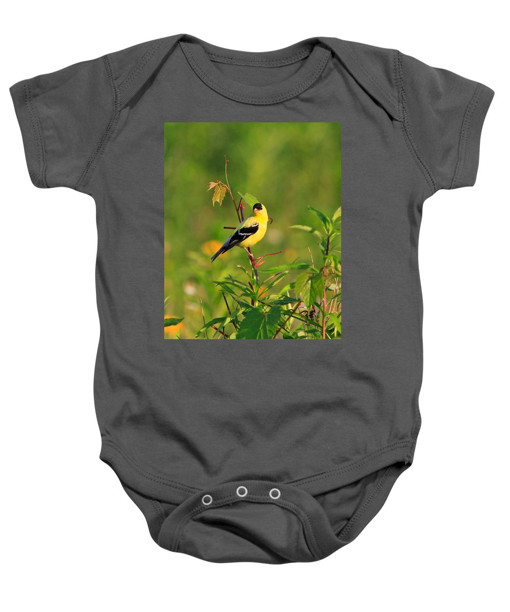 Gold Finch Baby Onesie featuring the photograph Gold Finches-2 by Robert Pearson