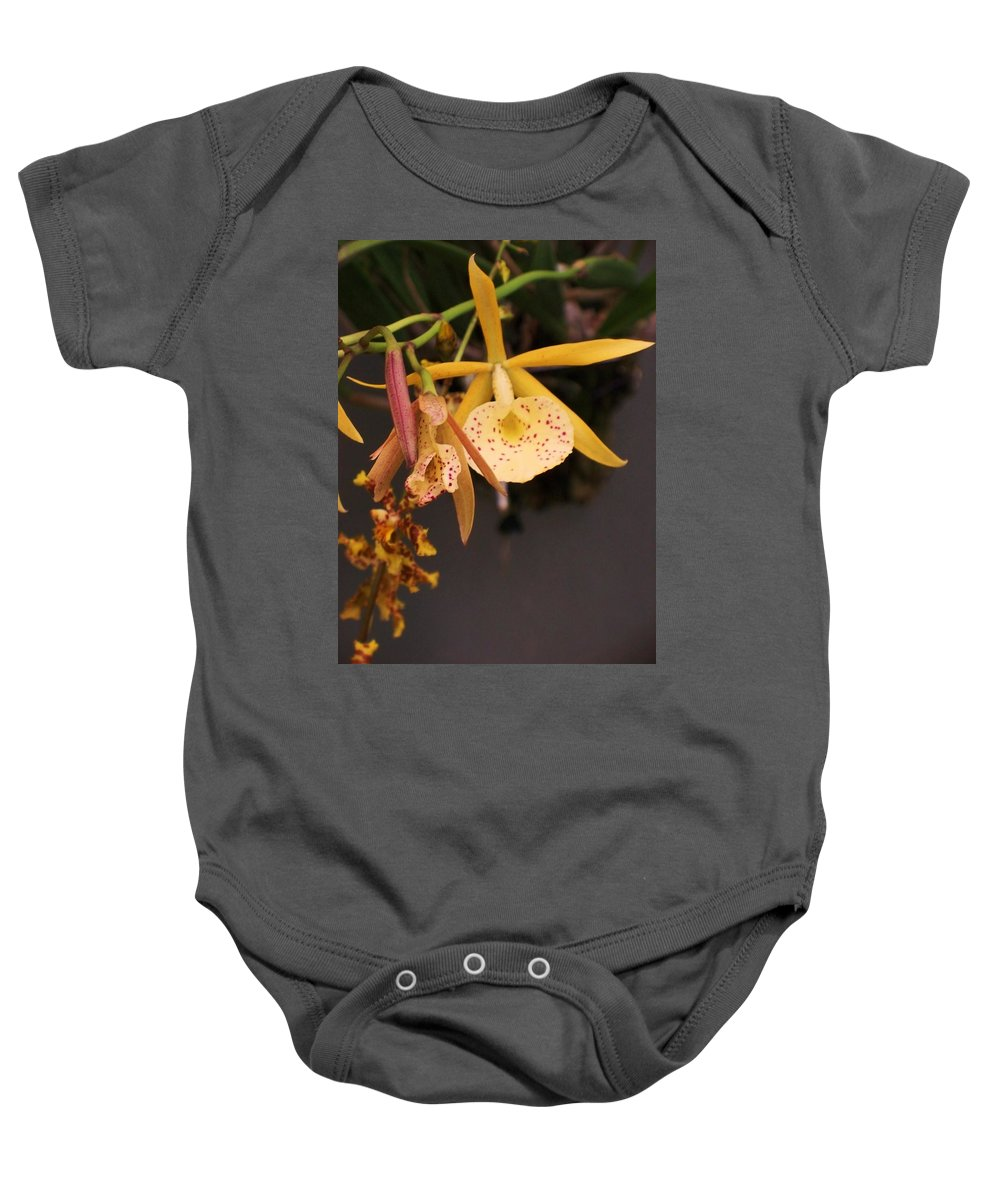 Gold Baby Onesie featuring the photograph Gold Yellow Orchid by Eric Schiabor