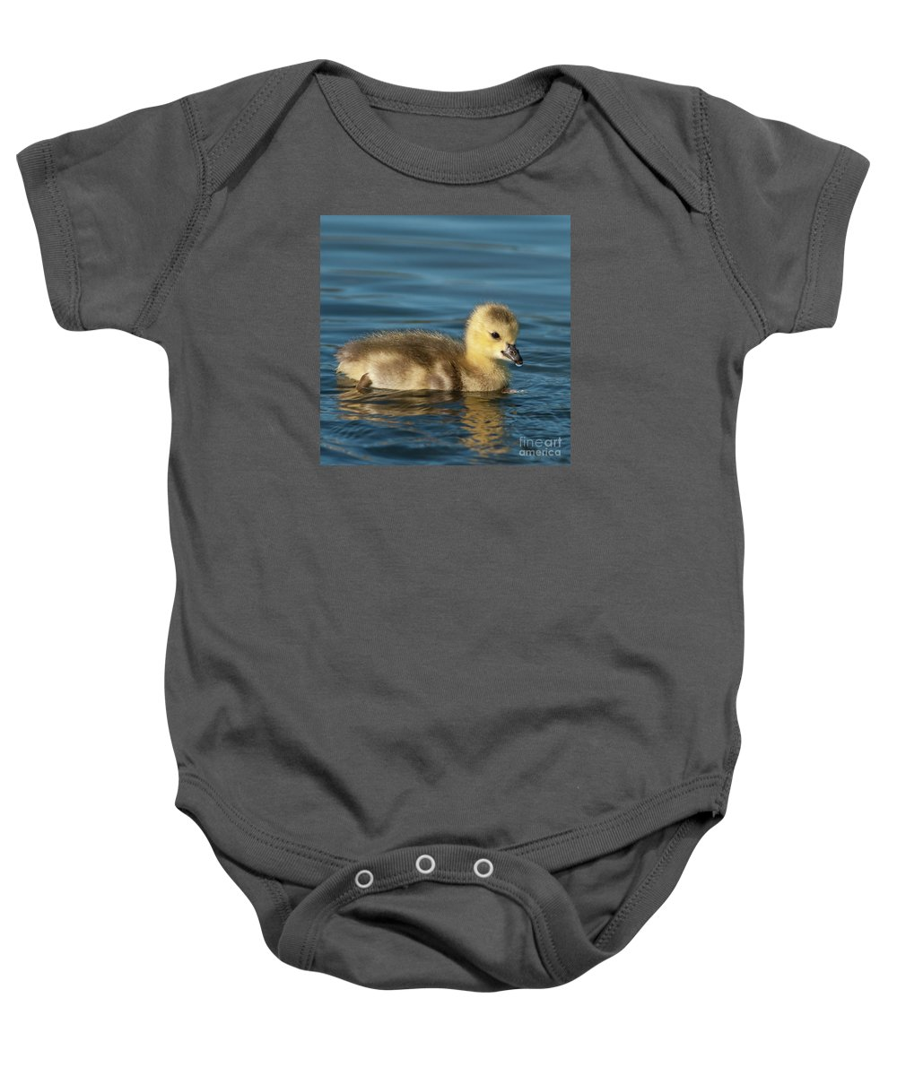 Festblues Baby Onesie featuring the photograph Gosling.. by Nina Stavlund