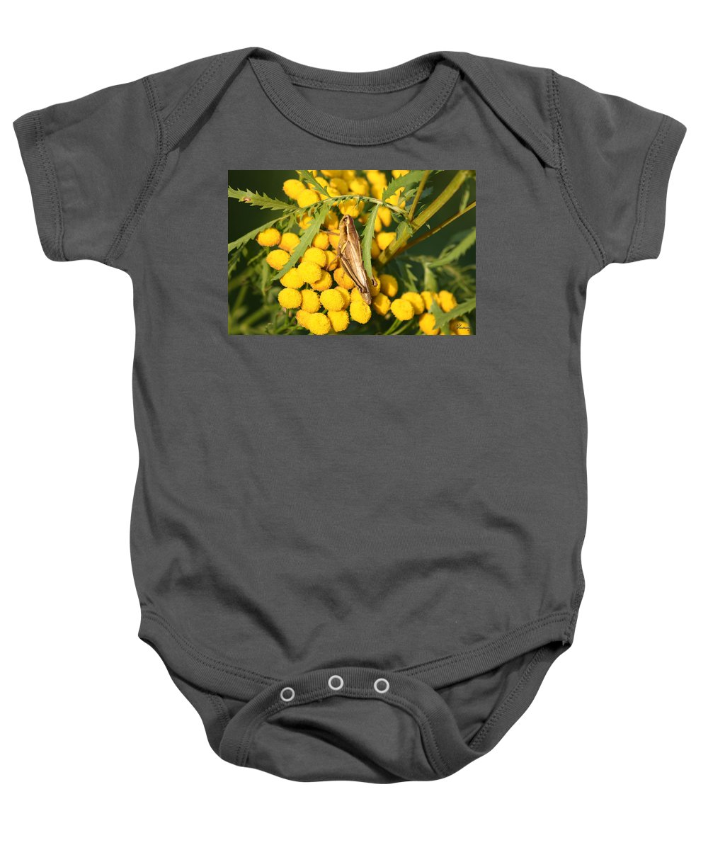 Bug Grasshopper Plants Flowers Nature Yellow Wild Life Green Weed Baby Onesie featuring the photograph Grasshopper by Andrea Lawrence