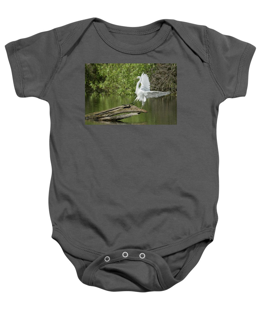 Great Egret Baby Onesie featuring the photograph Great Egret Landing by Richard Eastman
