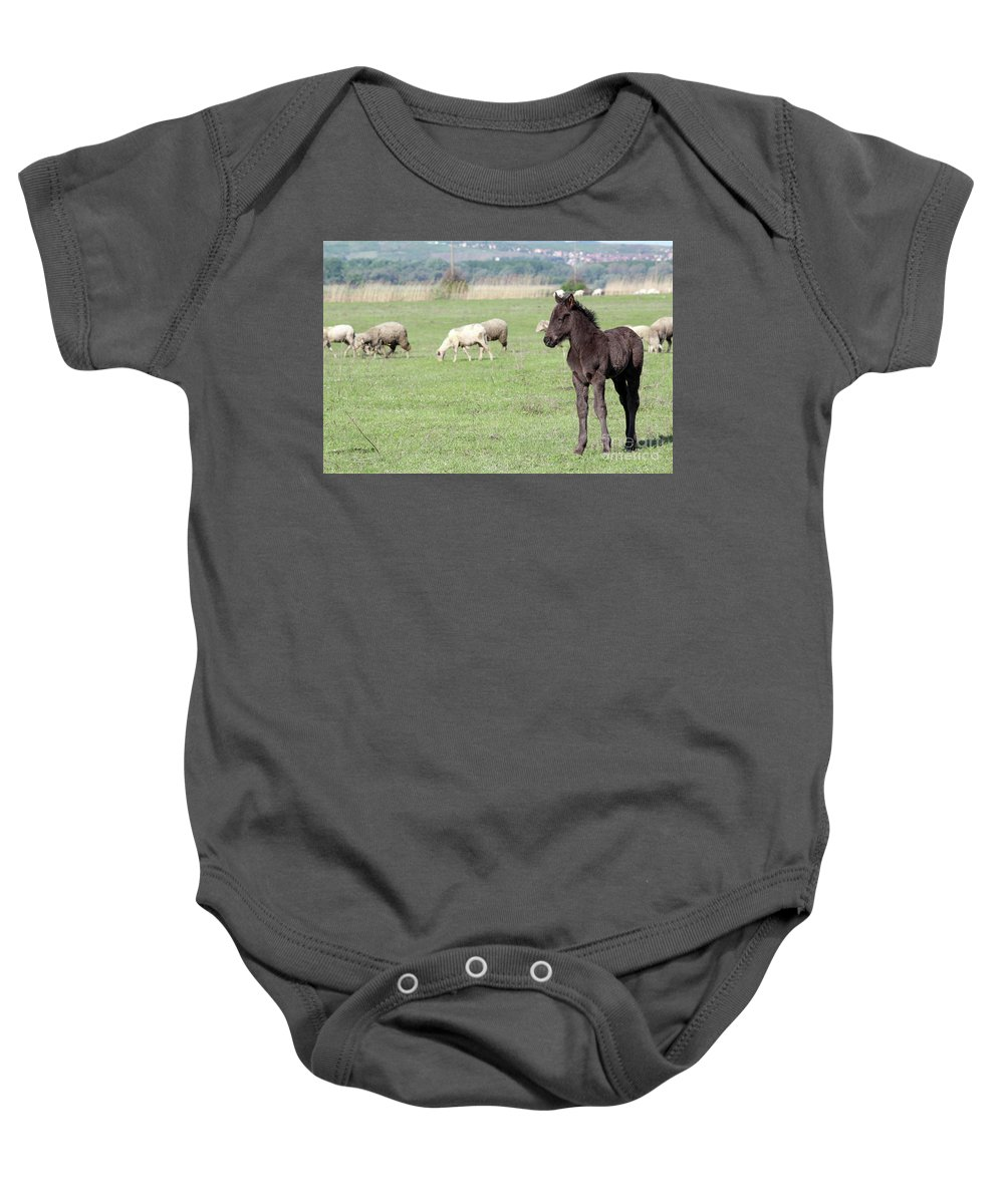 Horse Baby Onesie featuring the photograph Grey Foal On Pasture Farm Scene by Goce Risteski