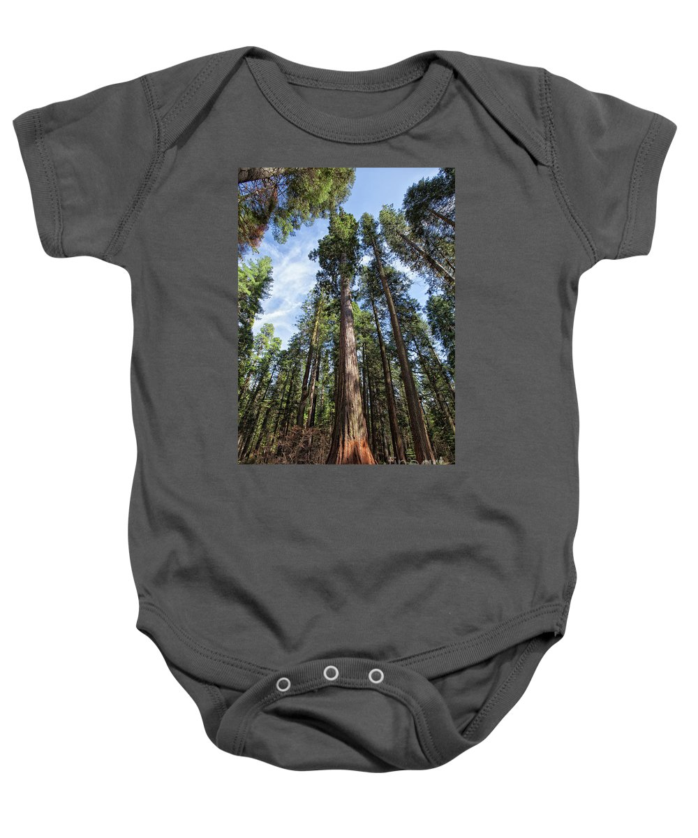 Redwood Trees Baby Onesie featuring the photograph Grove Of Big Trees by Sylvia Sanchez