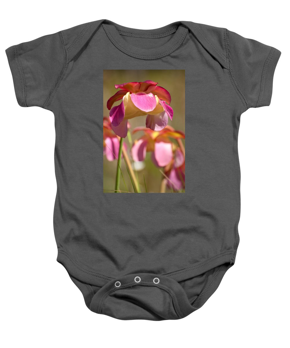 Pitcher Baby Onesie featuring the photograph Gulf Purple Pitcher Plant by Rich Leighton