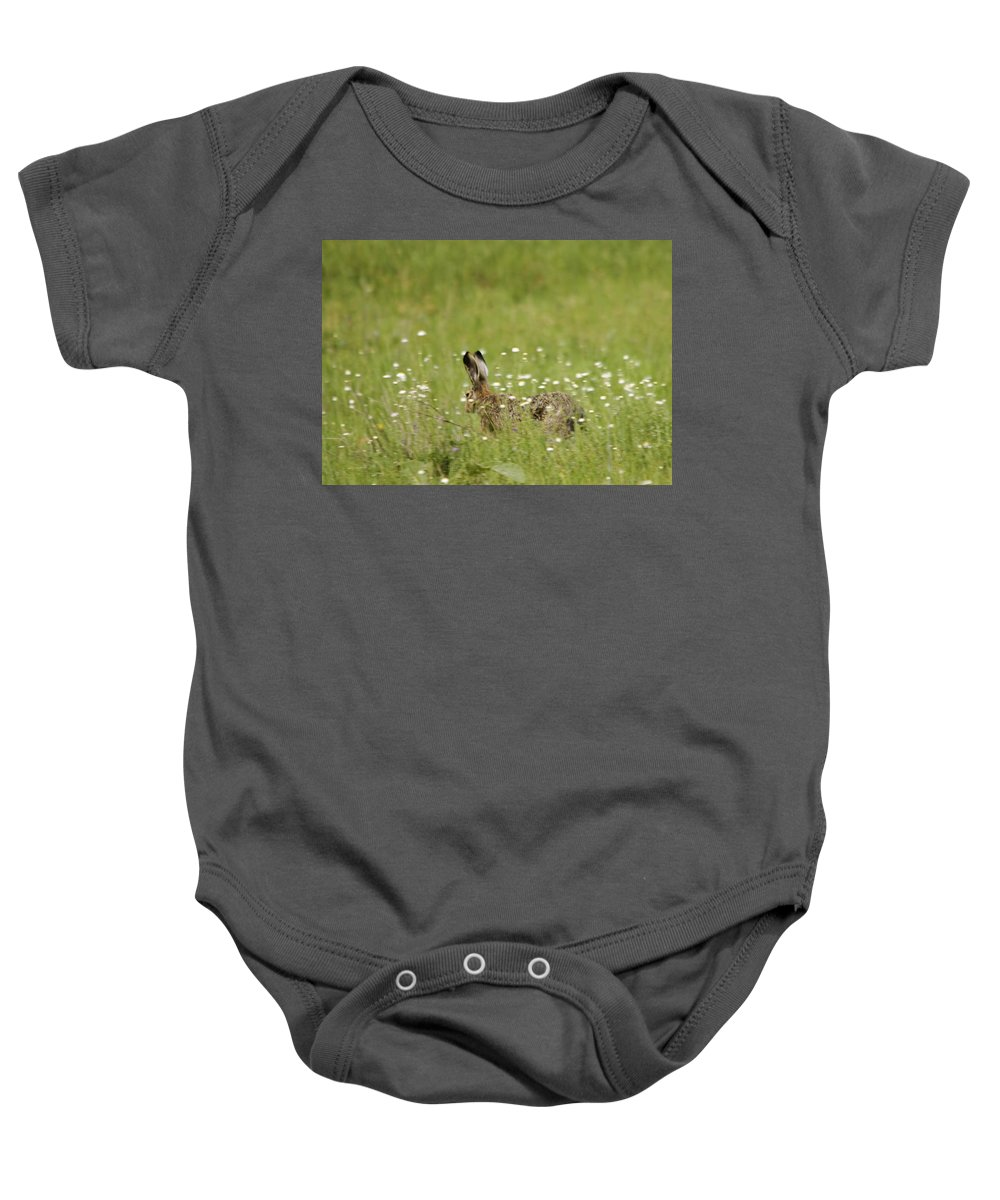 Hares Baby Onesie featuring the photograph Hare On The Run by Cliff Norton