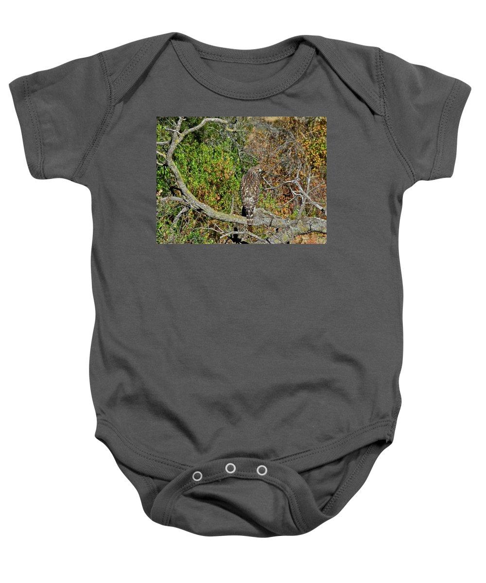 Birds Baby Onesie featuring the photograph Hawk In Hiding by Diana Hatcher