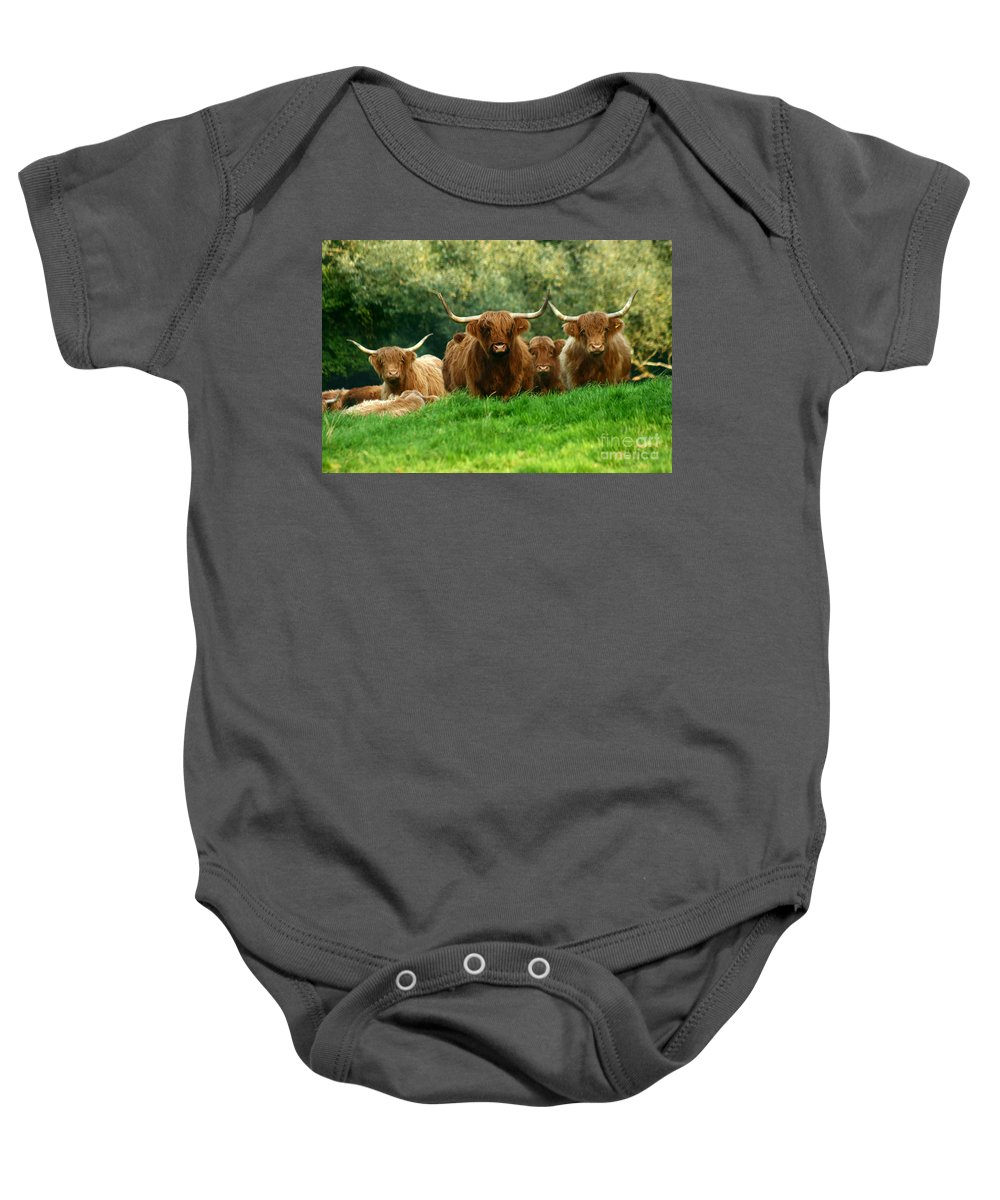 Cow Baby Onesie featuring the photograph Heilan Coo by Angel Ciesniarska