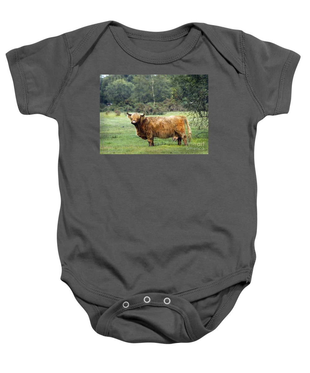 Heilan Coo Baby Onesie featuring the photograph Heilan Coo by Angel Ciesniarska