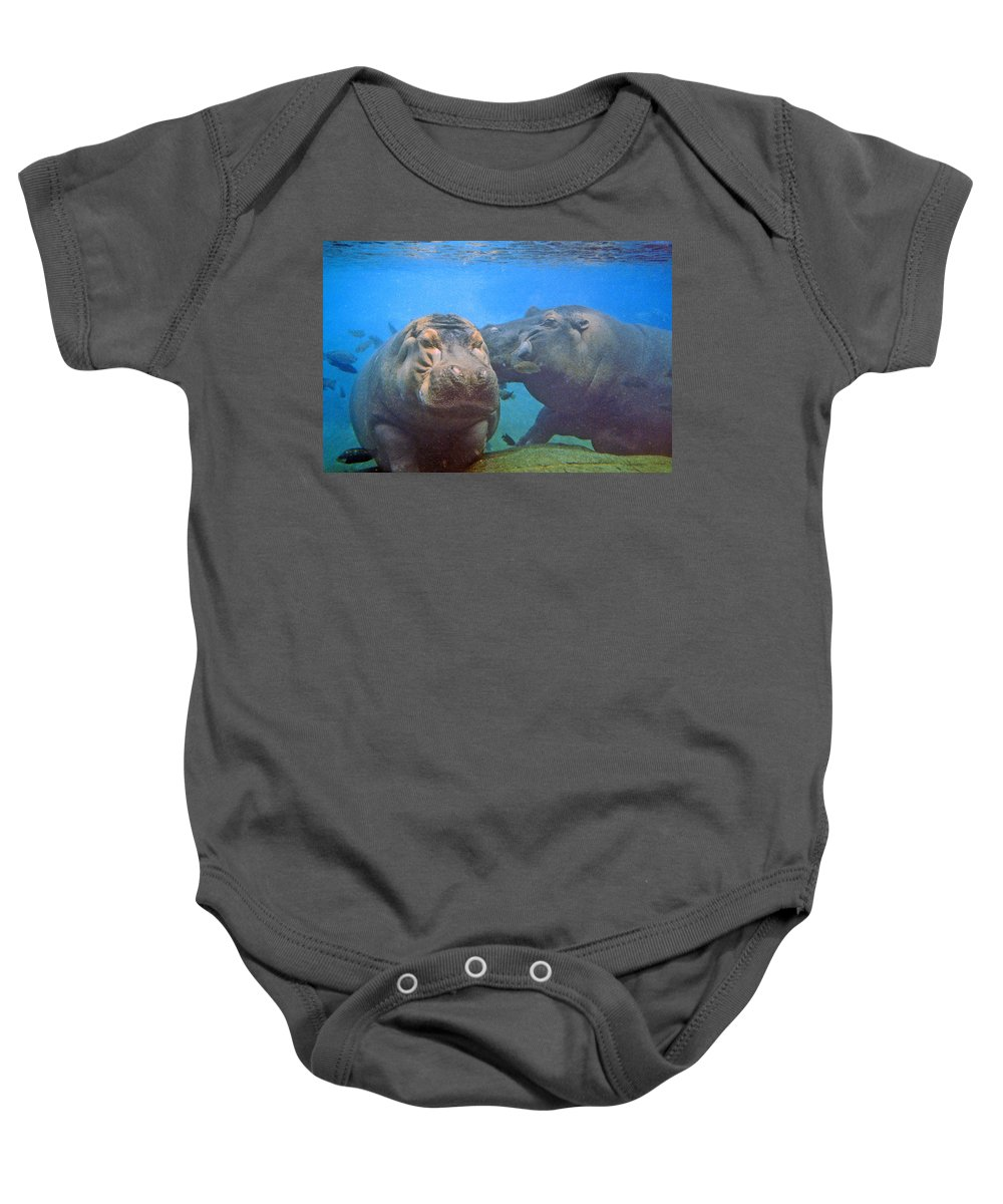 Animals Baby Onesie featuring the photograph Hippos In Love by Steve Karol