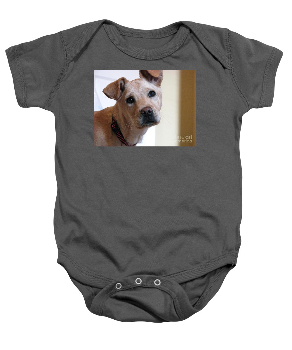 Dog Baby Onesie featuring the photograph Honey by Amanda Barcon
