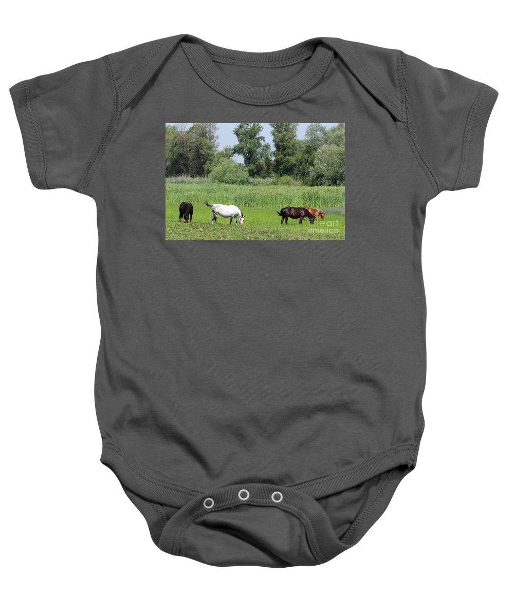 Horse Baby Onesie featuring the photograph Horses On Pasture Nature Farm Scene by Goce Risteski