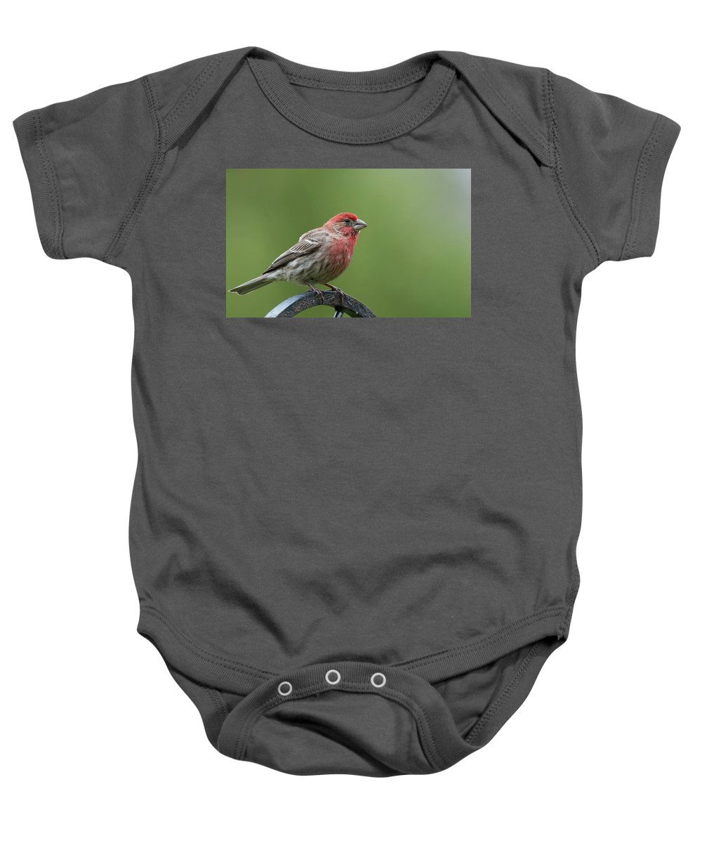 Birds Baby Onesie featuring the photograph House Finch by Clifford Pugliese