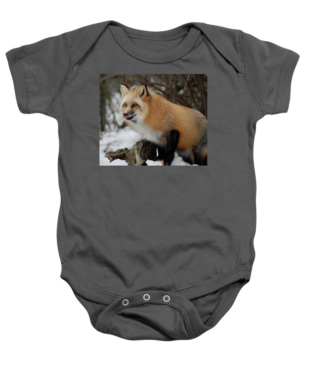 Fox Baby Onesie featuring the photograph Hungry Fox by Richard Bryce and Family