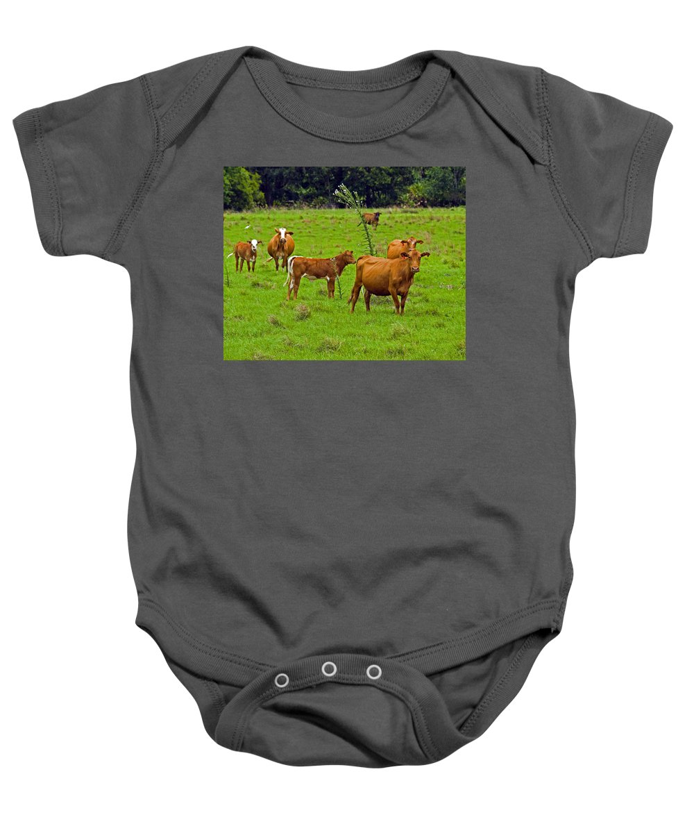 Black; Red; Angus; Brahman; Simmental; Red Poll; Hereford; Cattle; Braford; Cow; Cows; Bull; Milk; B Baby Onesie featuring the photograph Hybrid Cattle On The Deseret Ranch In East Central Florida by Allan Hughes