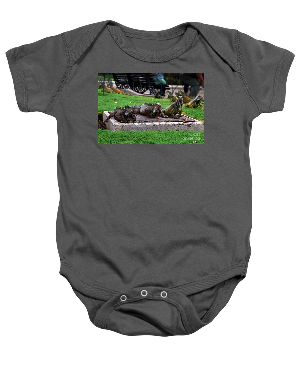 Iguana Baby Onesie featuring the photograph Iguana Trio by Catherine Sherman