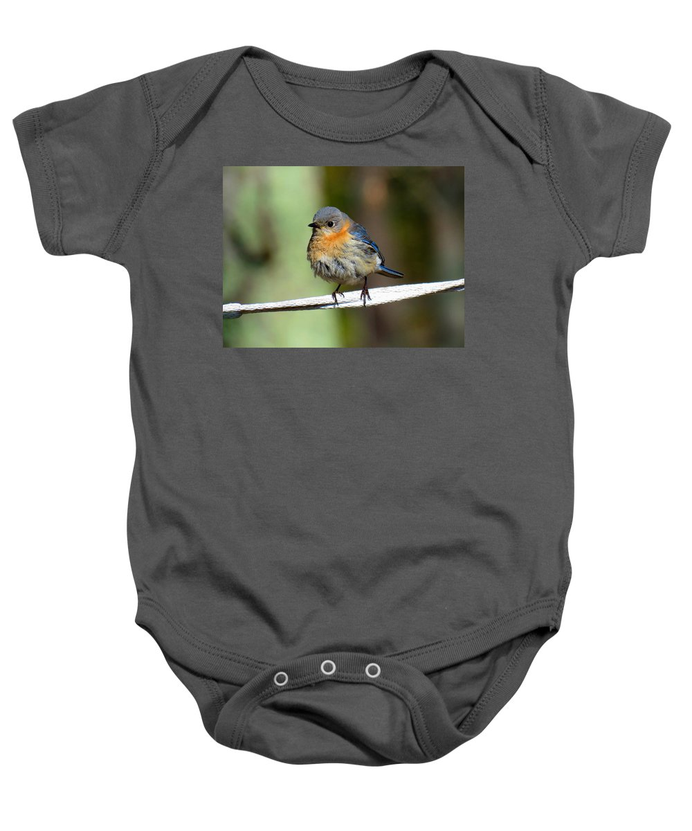 Bluebird Baby Onesie featuring the photograph Illusive Female Bluebird by Dianne Cowen