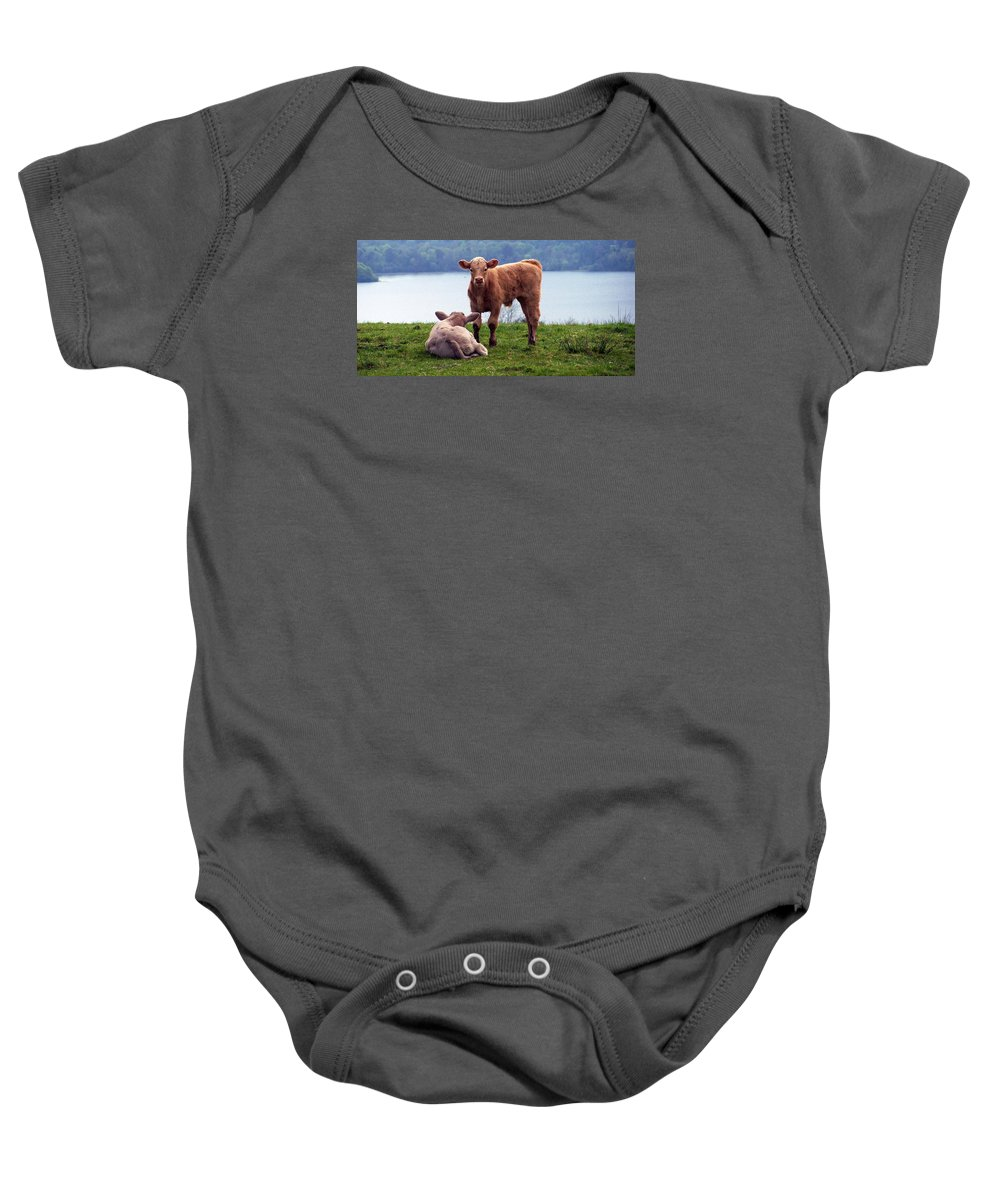 Ireland Baby Onesie featuring the photograph Irish Calves At Lough Eske by Teresa Mucha
