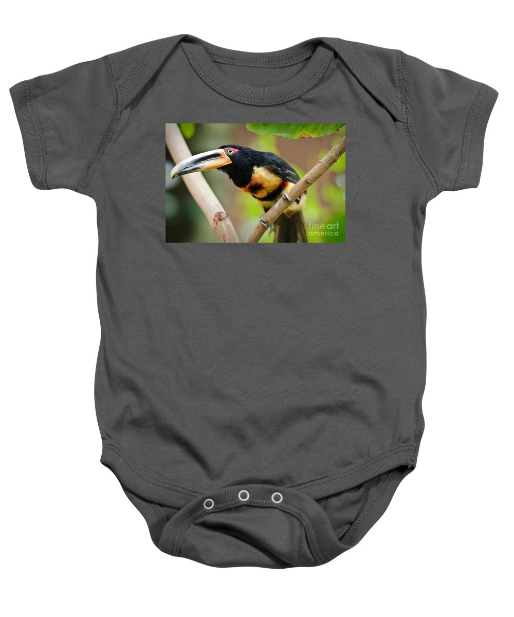 Aquarium Baby Onesie featuring the photograph It's All About The Beak by Charles Dobbs