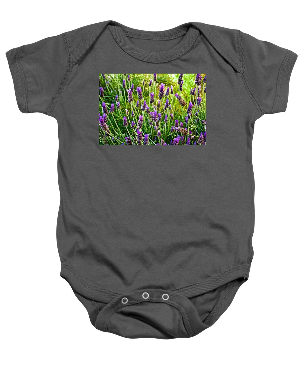 Lavender At Pilgrim Place In Claremont Baby Onesie featuring the photograph Lavender At Pilgrim Place In Claremont-california by Ruth Hager