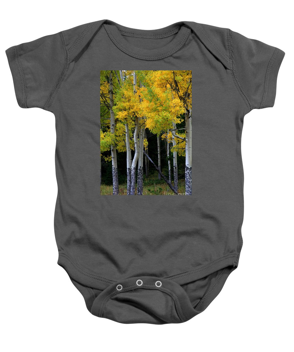 Aspens Baby Onesie featuring the photograph Leaning Aspen by Timothy Johnson