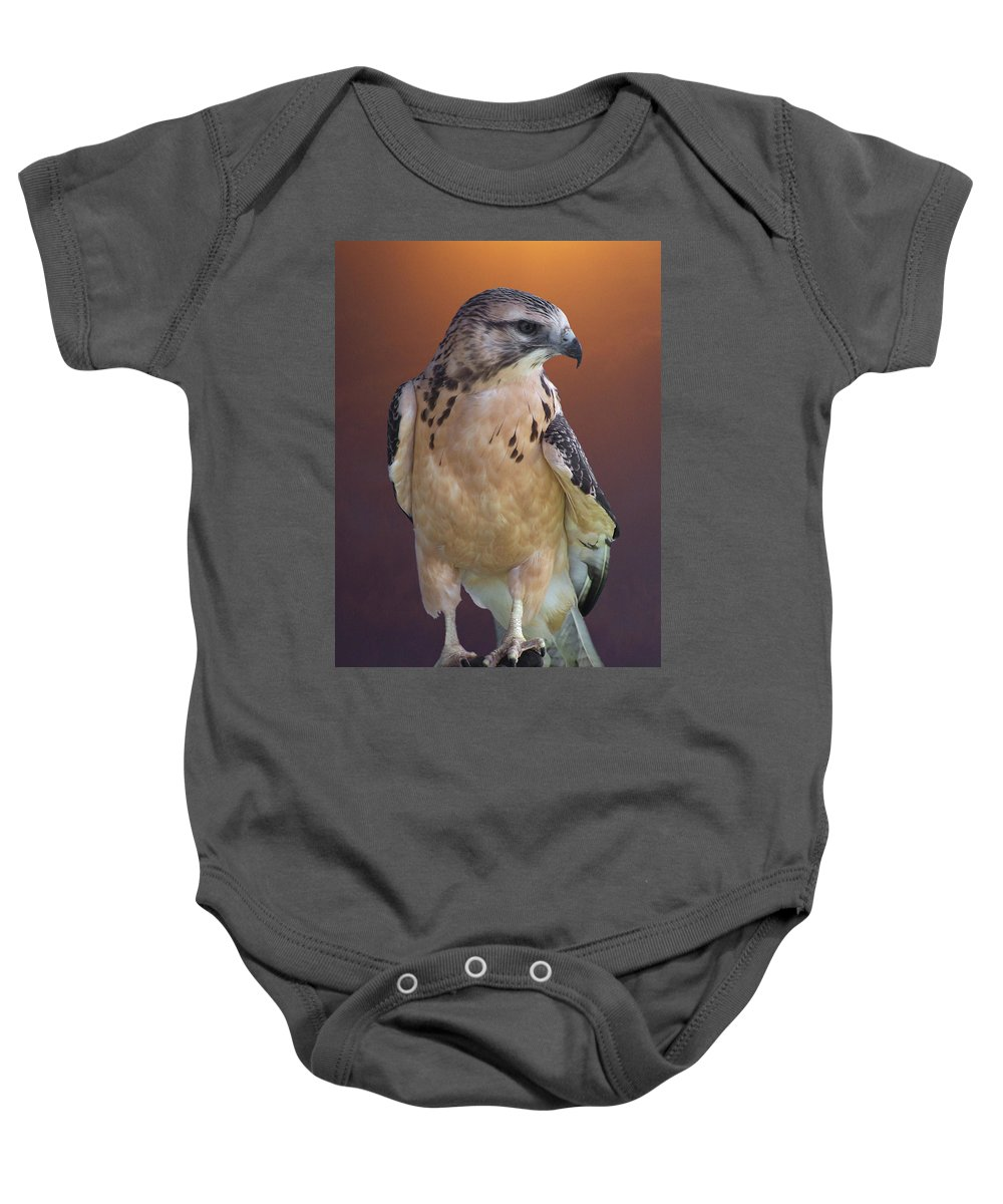 Light-morph Immature Swainson's Hawk Baby Onesie featuring the photograph Light Morph Immature Swainsons Hawk by Ernie Echols