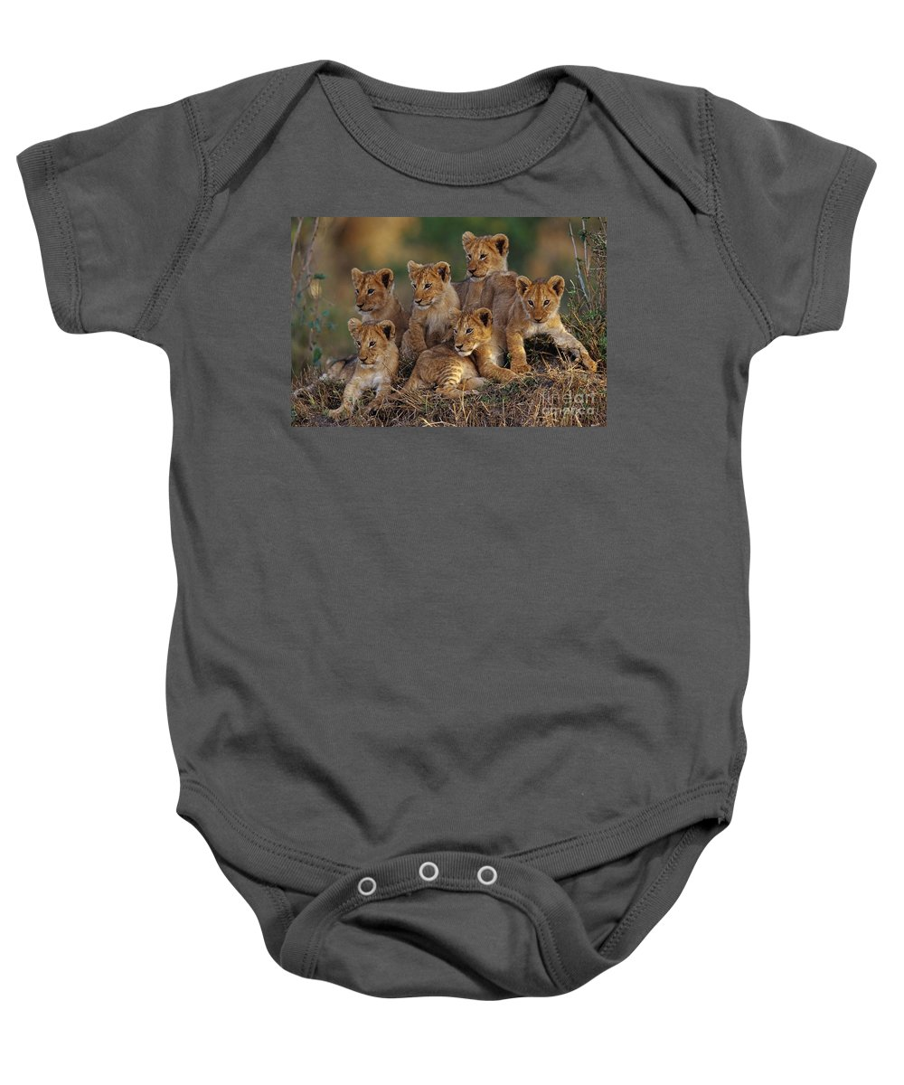 Mammal Baby Onesie featuring the photograph Lion Cubs by Joe McDonald and Photo Researchers