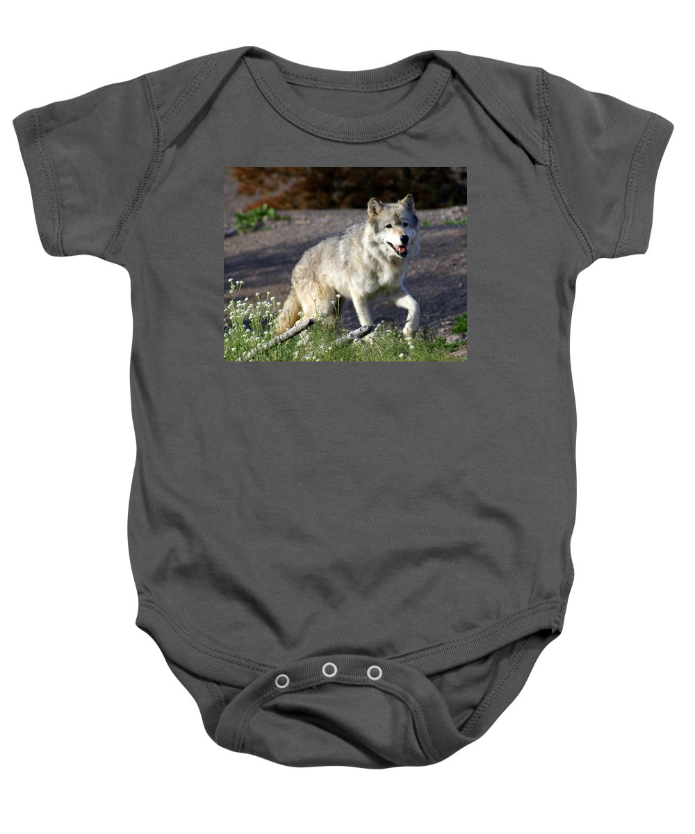 Wildlife Baby Onesie featuring the photograph Lonly Wolf by Marty Koch