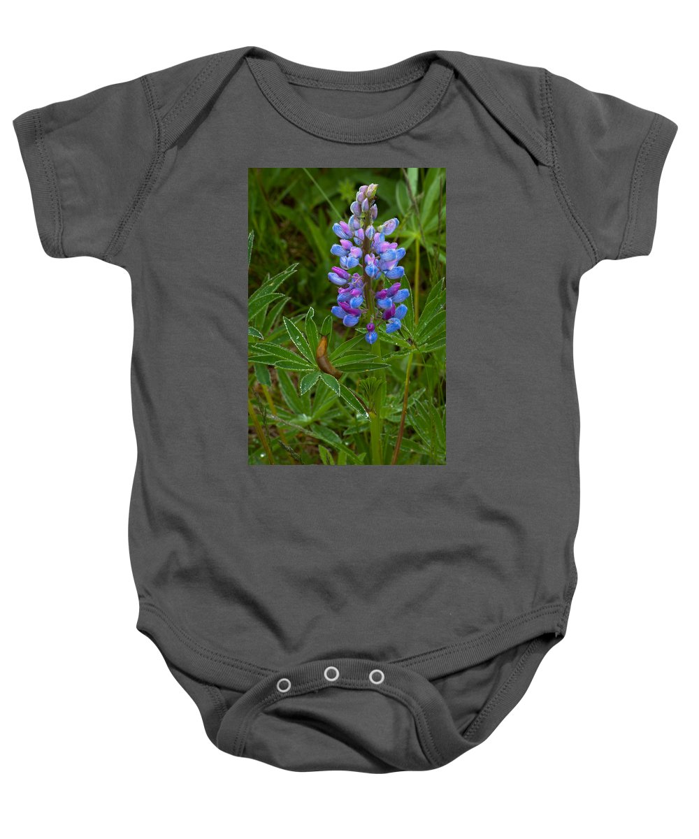 Wildflowers Baby Onesie featuring the photograph Lupin And Guest by Irwin Barrett