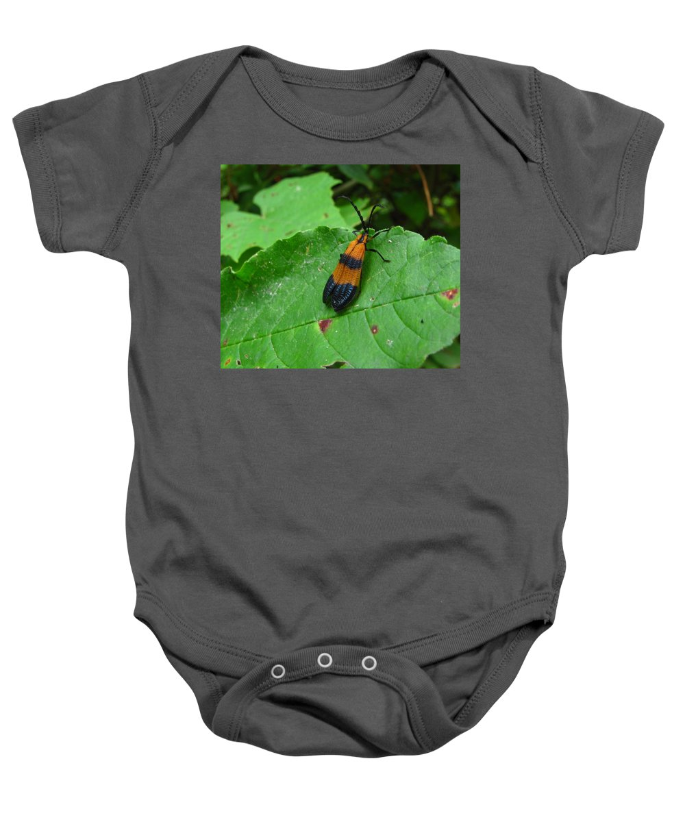 Lycomorpha Moth Images Orange And Black Moth Prints Forest Ecology Biodiversity Nature Entomology Oldgrowth Forest Preservation Baby Onesie featuring the photograph Lycomorpha Moth by Joshua Bales