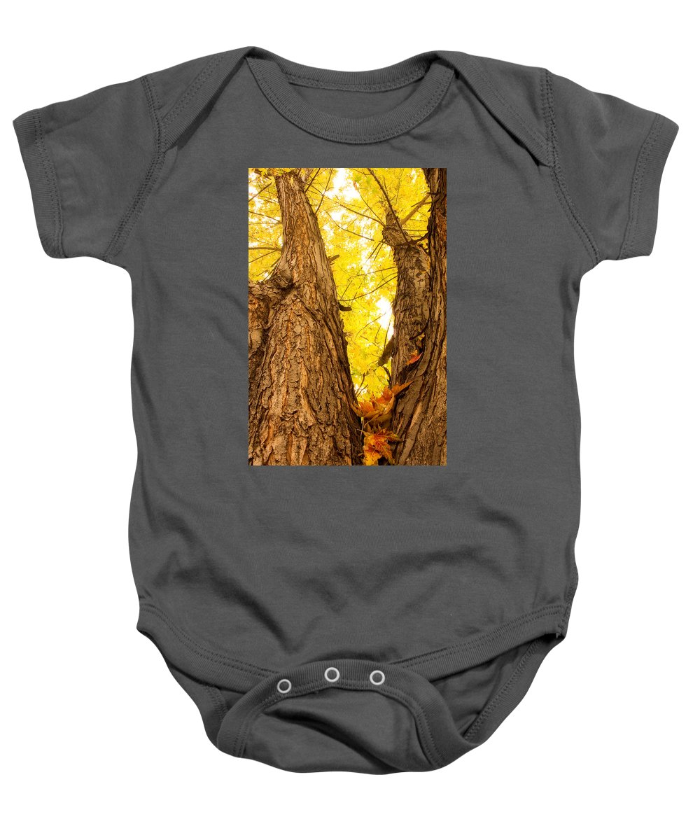 Autumns Baby Onesie featuring the photograph Maple Tree 3 by James BO Insogna