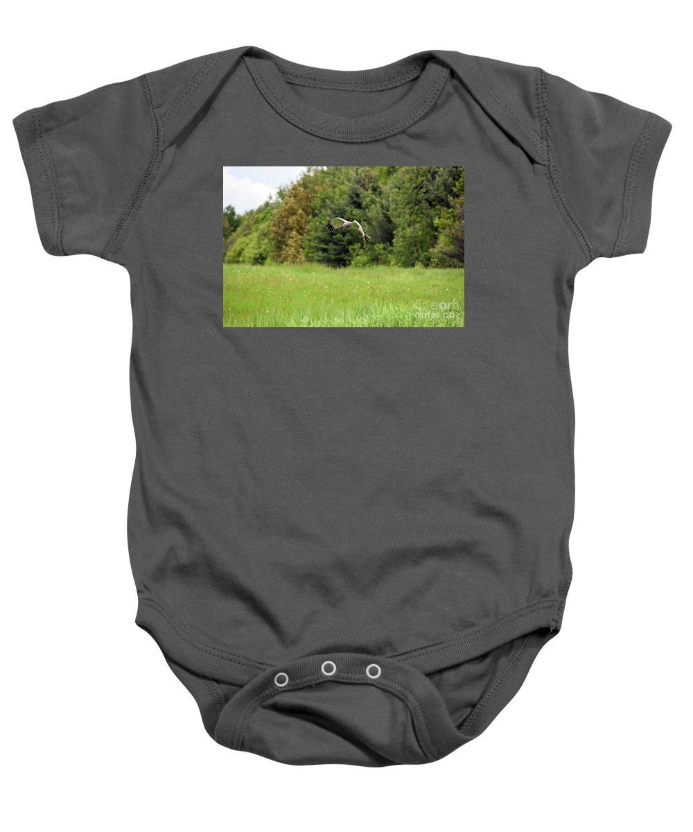 Marsh Hawk Baby Onesie featuring the photograph Marsh Hawk 2 by William Tasker