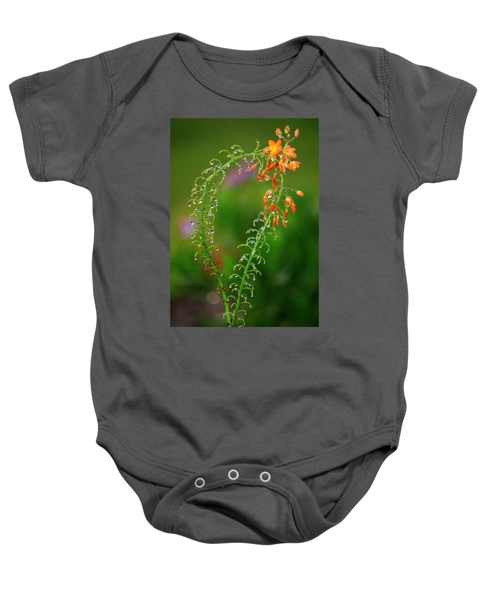 Flowers Baby Onesie featuring the photograph Morning Dew On Orange Flowers by Carol Groenen
