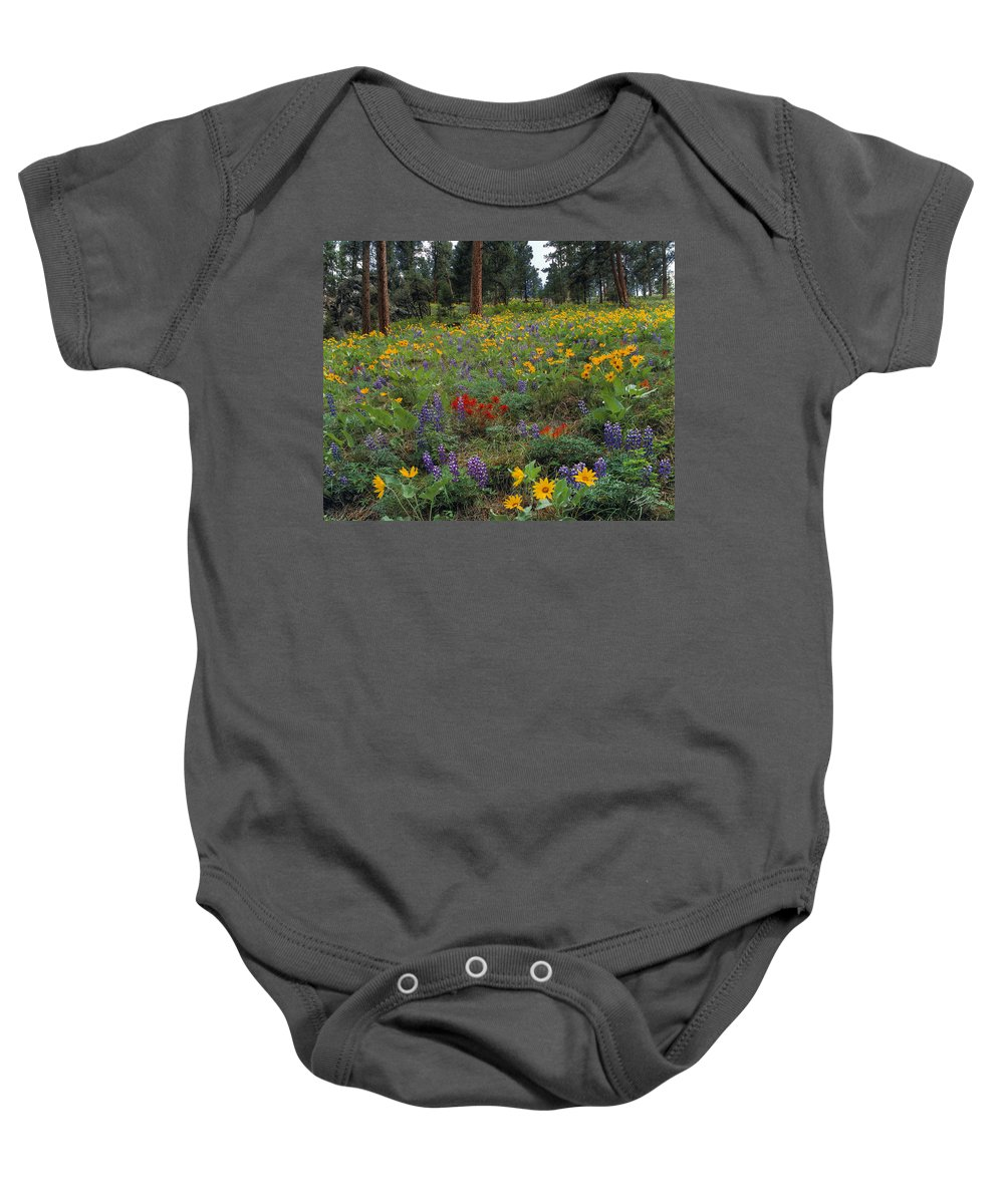 Arrowleaf Balsam Root Baby Onesie featuring the photograph Mountain Wildflowers by Leland D Howard